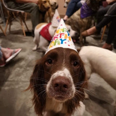 Doggy birthday Party Kibble bakery Dog Friendly Cafe Skipton Yorkshire