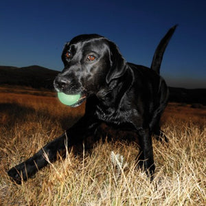 Glow Ball Dog Toy UK