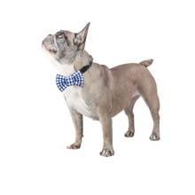 Load image into Gallery viewer, Funky Dog Large Blue Striped Bow Tie