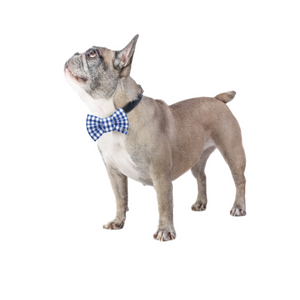 Funky Dog Large Blue Striped Bow Tie
