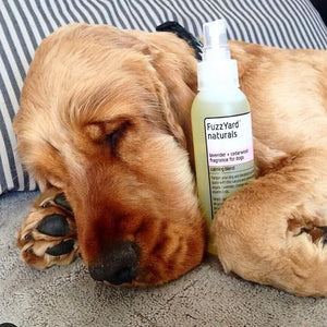 FuzzYard Naturals Lavender and Cedarwood Fragrance For Dogs