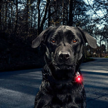 Load image into Gallery viewer, Orbiloc Dog Collar Safety Light