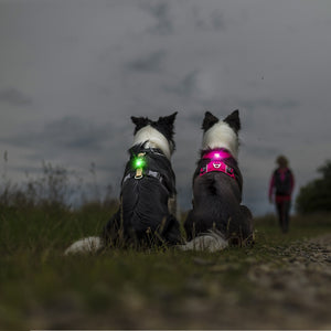 Orbiloc Dog Collar Safety Light