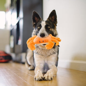 P.L.A.Y. King Crab Dog Toy