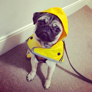 Sotnos Yellow Sunshine Dog Raincoat