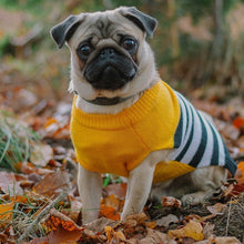 Load image into Gallery viewer, Sotnos Yellow Sunshine Stripe Dog Jumper