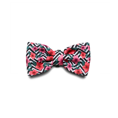 Zee Dog Mahalo Large Bow Tie