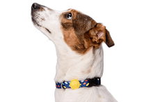 Load image into Gallery viewer, MORSO COLOR INVADERS DOG COLLAR