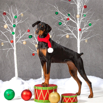 Festive Christmas Doggy Photoshoot