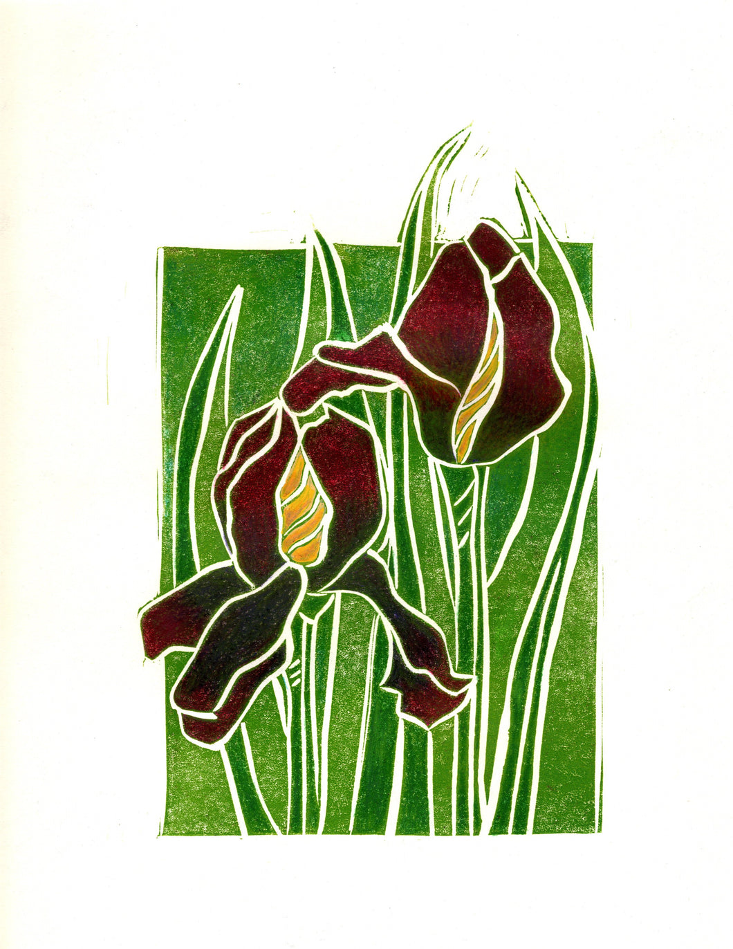 Hand-Colored Iris Linocut Limited Edition Print by Artist RH Zondag