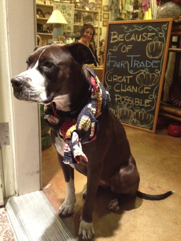 Holly, the Fair Trade dog!