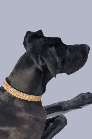 Great Dane wearing natural rubber collar