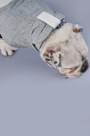 Bull dog wearing a grey reversible dog jacket. Close up of collar and head.