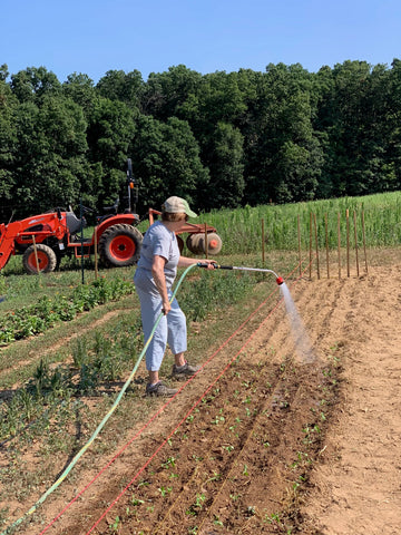 Hickory View Farms watering our new transplants.