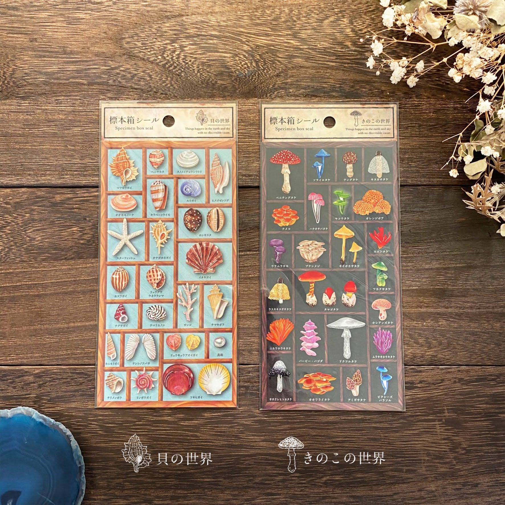 Specimen Box Stickers - Mushrooms