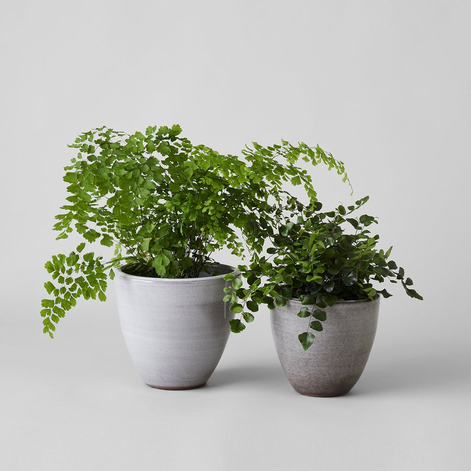 Abelia flat ceramic planter in Grey