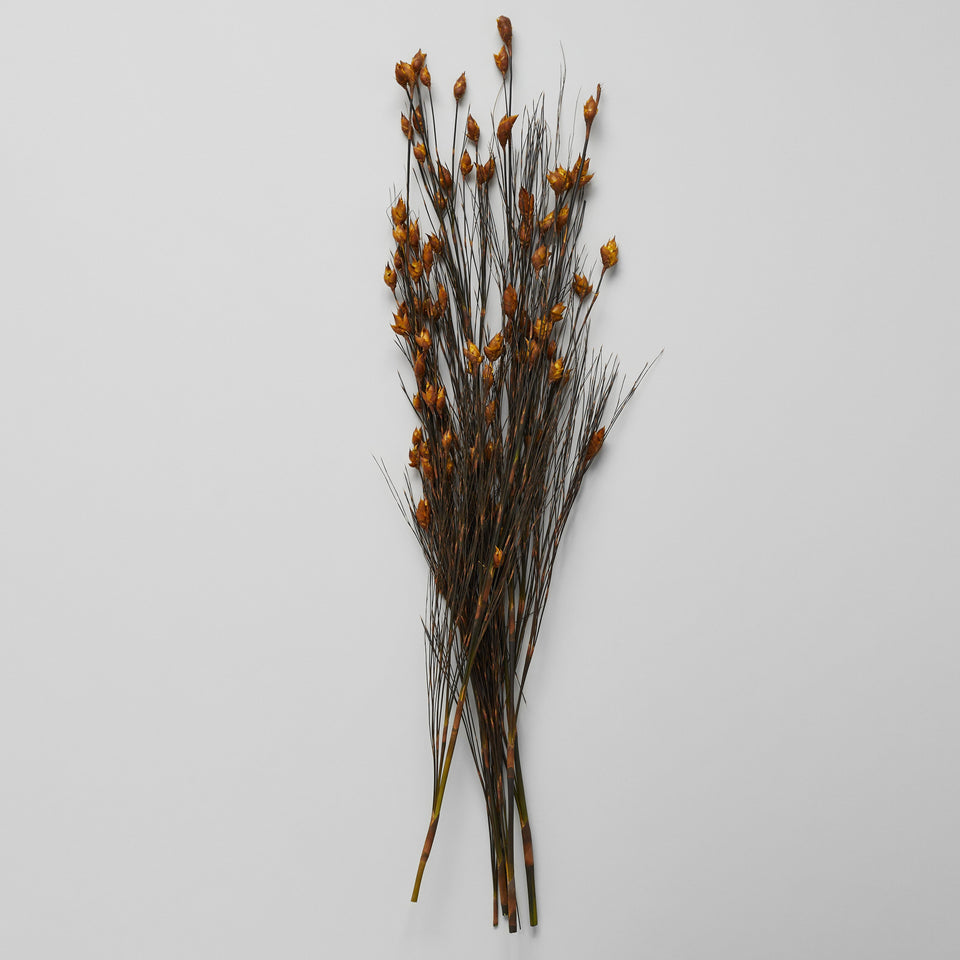 Dried Bell Grass With Gold Pods