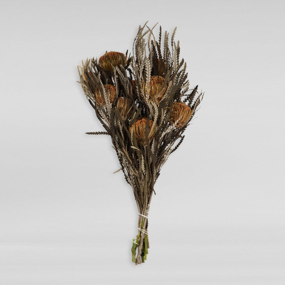 Dried Protea Flower