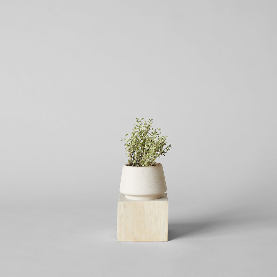 Jikoku Shell Pot with Pale Wood Base