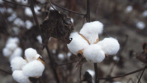Why Hemp Is Superior To Cotton