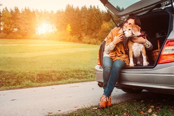 How to safely transport your dog in a vehicle