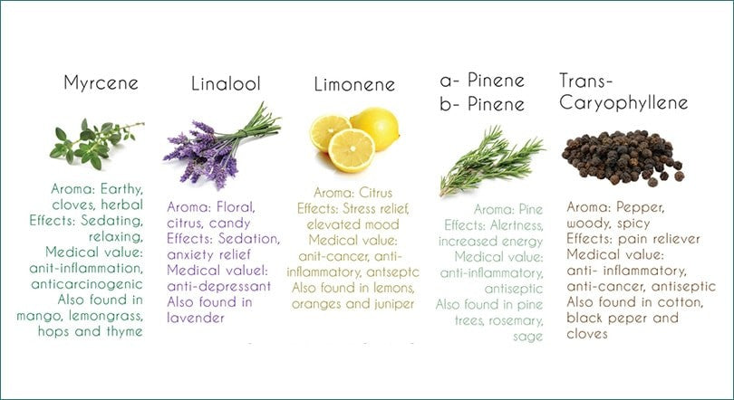 Why Do Terpenes Matter?