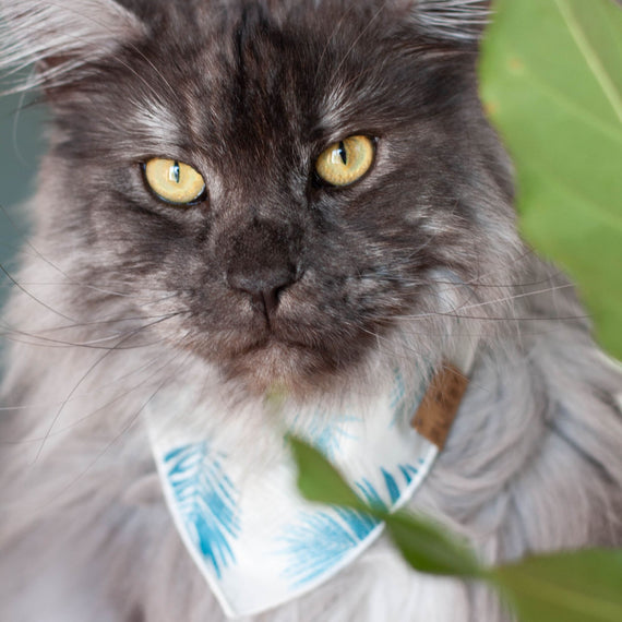 FURST - Adorable cat wearing Bermuda bandana