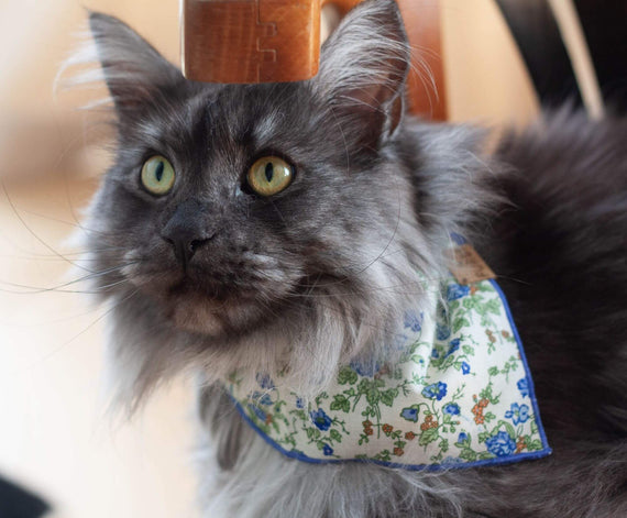 FURST - Adorable cat wearing the wild bandanna