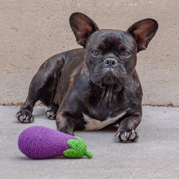 FURST - French Bulldog with his Sexy Eggplant Toy