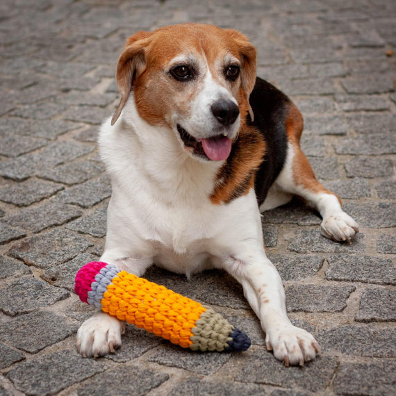 FURST - Adorable Beagle with her toy Pencil