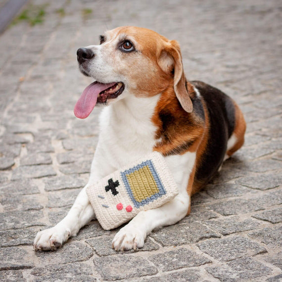 FURST - Beagle adorable con su juguete Toy Game