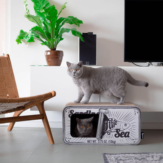 FURST - Upscale Scratcher in the shape of Sardines Box and original scraper for natural white cat