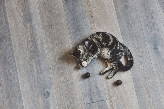 FURST - Cat having fun playing with leather balls and cork