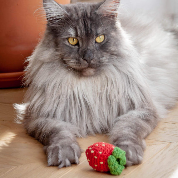 FURST - The Strawberry is a high-end and interactive toy for cat to throw