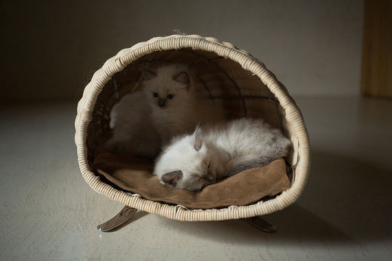 FURST - Baco raised cat lair in the shape of a horn of plenty