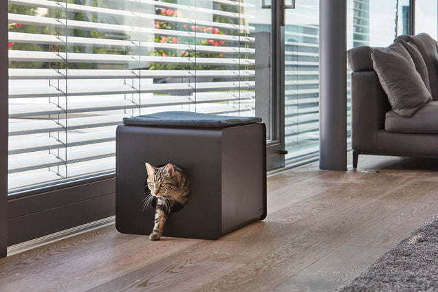 FURST - Adorable cat coming out of her designer bathroom equipped with anthracite scala cushion