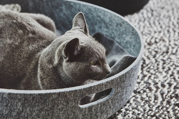 FURST - Cesto designer felt basket for cats