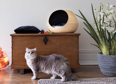FURST - Design bola isca para gato de bambu natural high-end na cor interior preto
