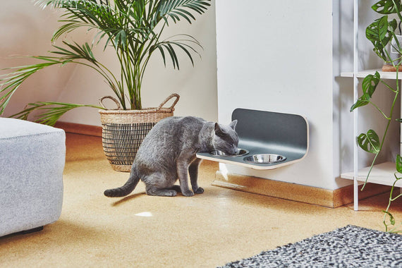 FURST - Set of high-end mature bowls for cats of gray color