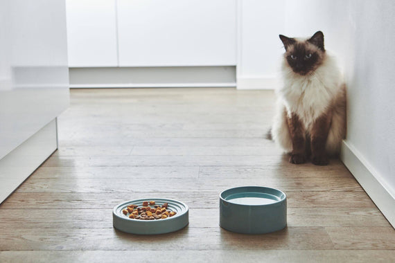 FURST - High-end anti-glutton ceramic bowl for blue cat