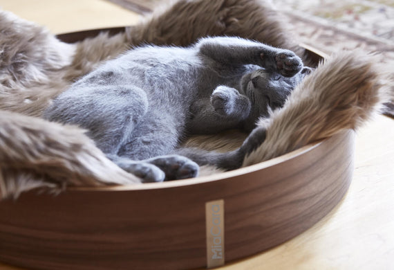 FURST - Cute little cat stretching in a beautiful anello basket for cat in walnut wood with its taupe mattress in synthetic fur