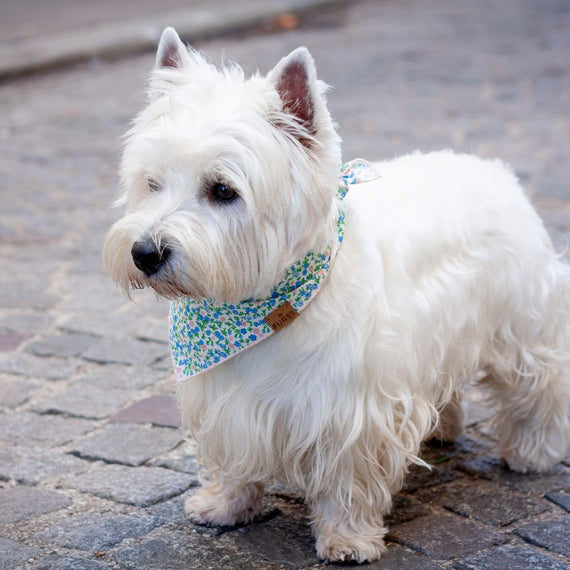 FURST - Westie wearing the Giverny bandana for dogs