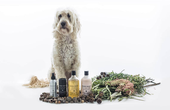 FURST - Concentrated natural plants in high-end conditioner for the well-being of the dog with lemongrass and niaouli