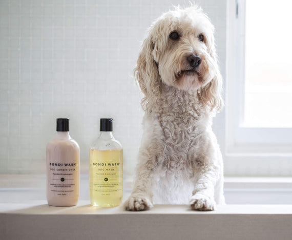 FURST - Dog leaving his bath, after a shampoo and a natural after-shampoo of the range Bondi Wash