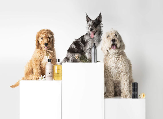 FURST - Three dogs present the entire collection Bondi Wash to the natural composition, to wash, make shine, deodorize their coat in a natural way.