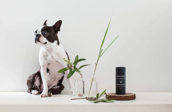FURST - Very practical high-end dry shampoo for the well-being of the dog with lemongrass and niaouli