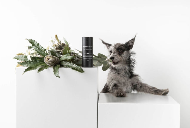FURST - Nice freshness of a high-end dry shampoo for the well-being of the dog with lemongrass and niaouli