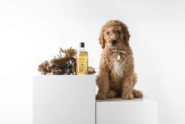 FURST - Nice freshness of a high-end shampoo for the well-being of the dog with lemongrass and niaouli