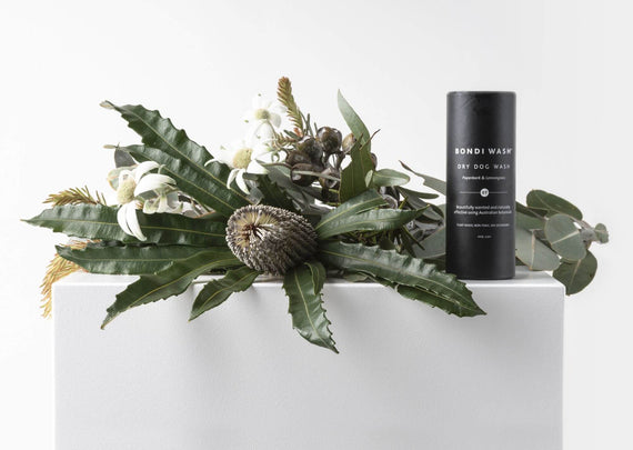 FURST - Concentrated natural plants for this high-end dry shampoo for the well-being of the dog with lemongrass and niaouli