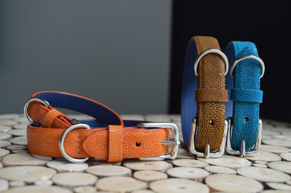 FURST - Magnificent line of exceptional high-end dog collars in shagreen in several colors